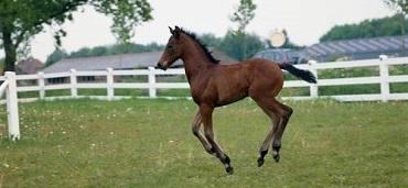 Klicken Sie für Informationen zur erfolgreichen Pferdezucht