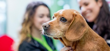 Klicken Sie zum Besuch der Petcampus.de Webseite mit aufgezeichneten Webinars