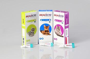 Bravecto SpotOn für Katzen in allen Handelsformen